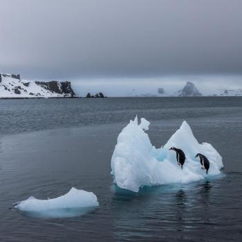 Banquise Arctique: une fonte anormalement rapide en juillet