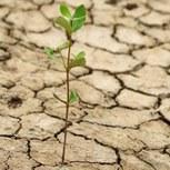 La sécheresse gagne du terrain